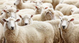 Natural Sheeps Wool Insulation