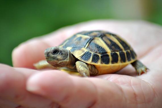 Скачать песню черепаха ахааха