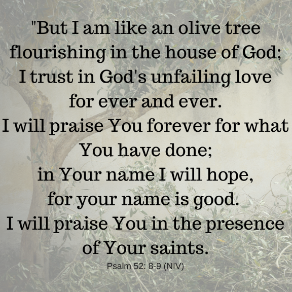 Scripture/Psalm52:8-9/ An olive tree flourishing