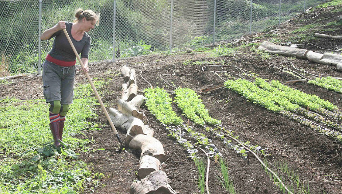 Caucasian female farmer using a back hoe in a vegetable garden.