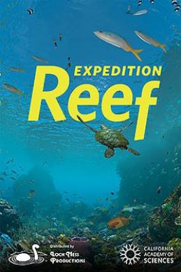 under water reef