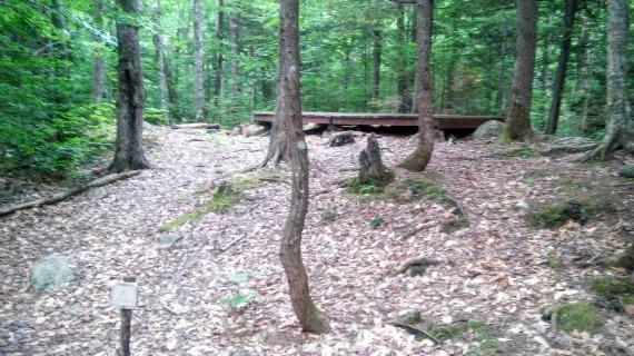 Rocky Branch Shelter #1 - Tent Platform #3