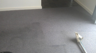 cleaning carpeted area