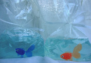 Fish in a bag soap for kids