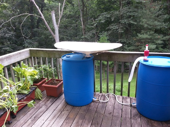RainSaucer - Collecting Rain for fly traps and tropical plants