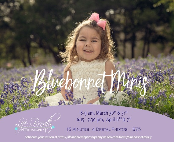 bluebonnet mini sessions pflugerville round rock