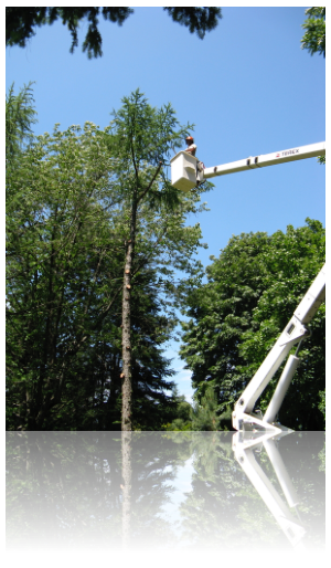 portland tree and hedge pruning services by rctreescapes