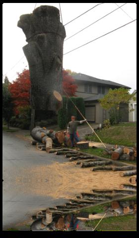 providing emergency tree services in portland