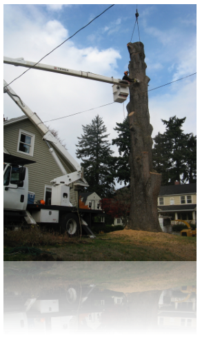 portland tree removal services by rctreescapes